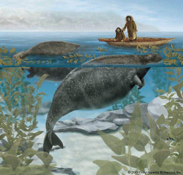 15 animales extintos en los últimos 250 años (17)
