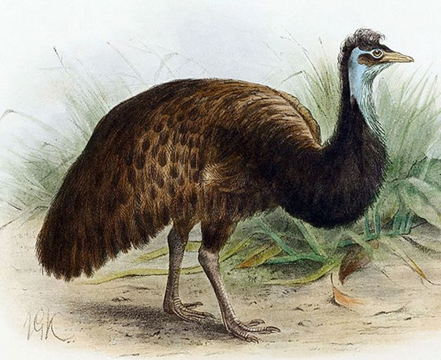 15 animales extintos en los últimos 250 años (15)