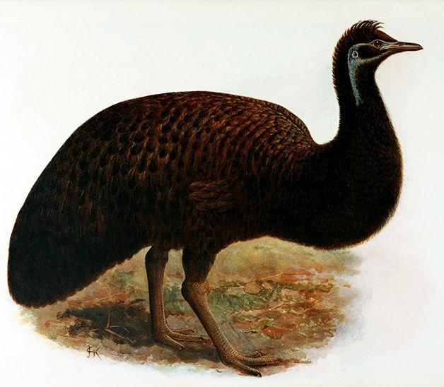 15 animales extintos en los últimos 250 años (2)
