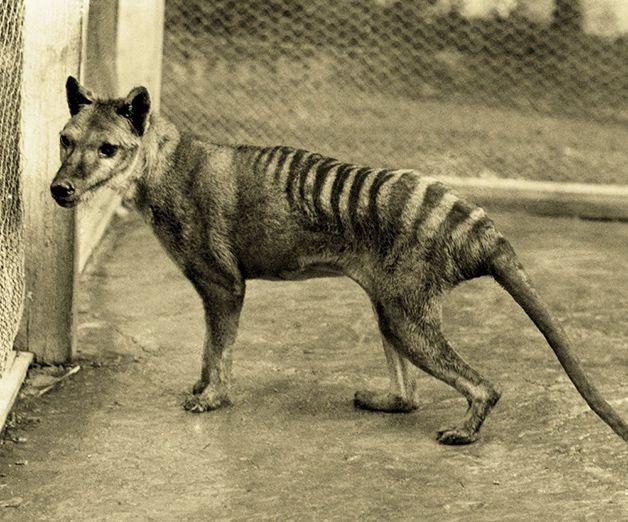15 animales extintos en los últimos 250 años (28)