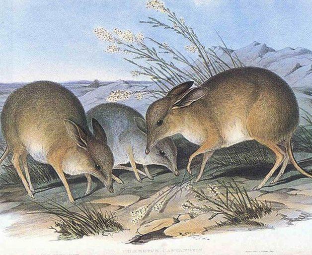 15 animales extintos en los últimos 250 años (14)