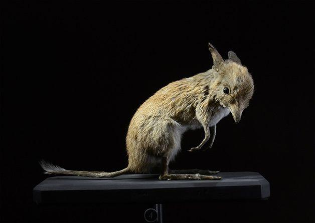 15 animales extintos en los últimos 250 años (13)