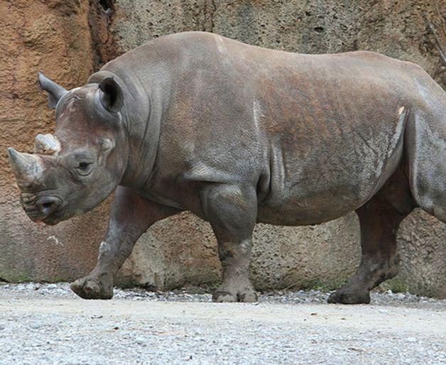 15 animales extintos en los últimos 250 años (26)
