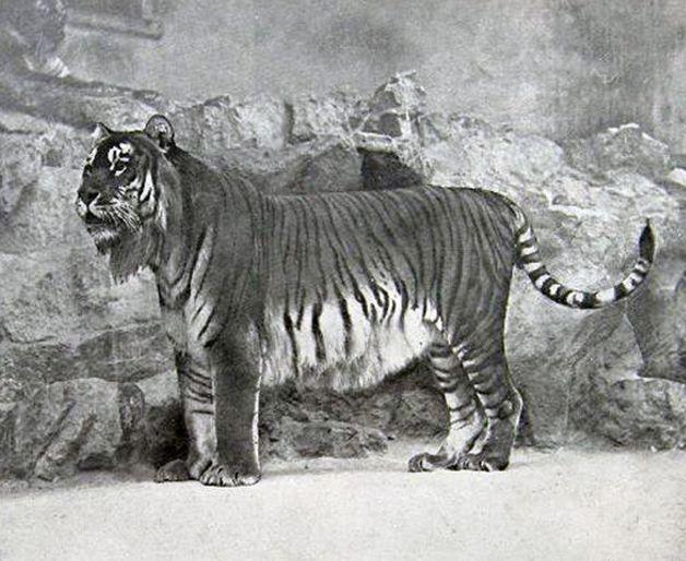 15 animales extintos en los últimos 250 años (25)