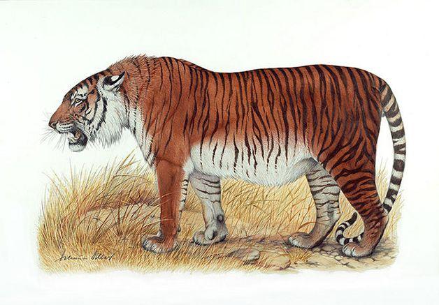 15 animales extintos en los últimos 250 años (10)