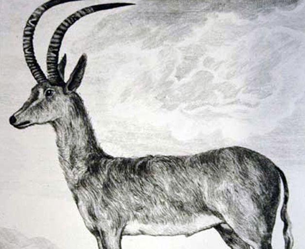 15 animales extintos en los últimos 250 años (24)