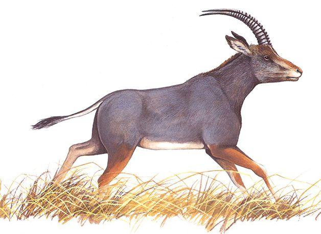 15 animales extintos en los últimos 250 años (9)