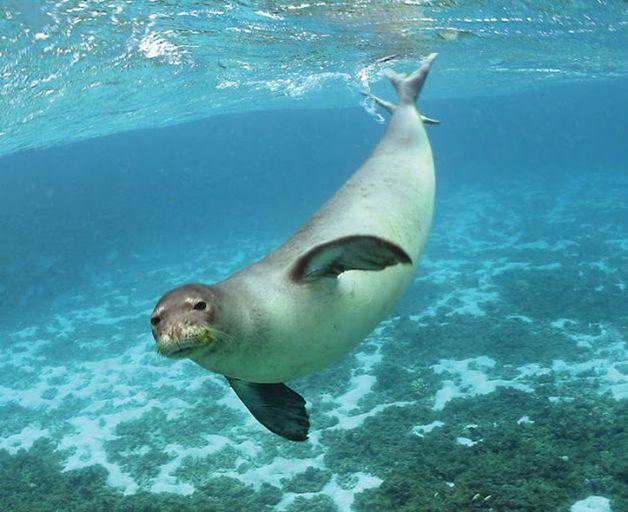 15 animales extintos en los últimos 250 años (8)