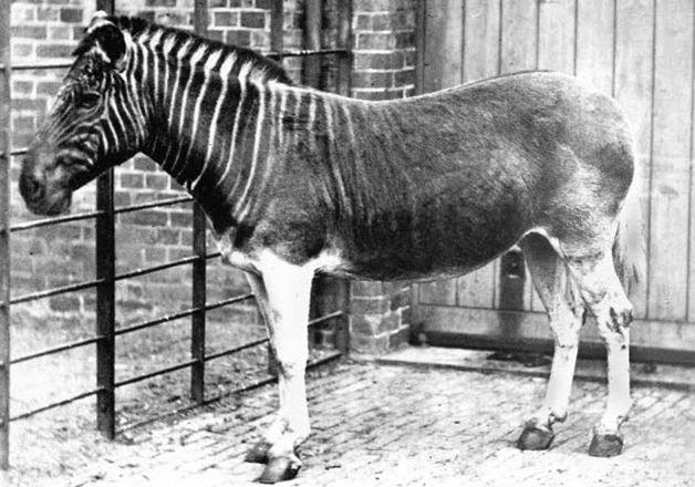 15 animales extintos en los últimos 250 años (22)
