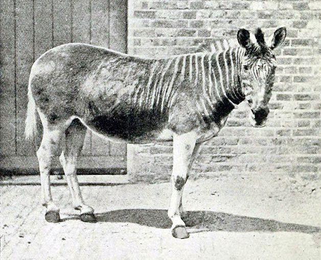 15 animales extintos en los últimos 250 años (7)