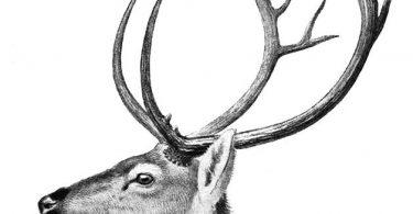 15 animales extintos en los últimos 250 años (6)