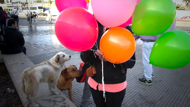 Estoy Aquí campaña creativa perror de la calle (4)