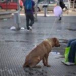 Proyecto creativo hace que los perros callejeros dejen se ser invisibles