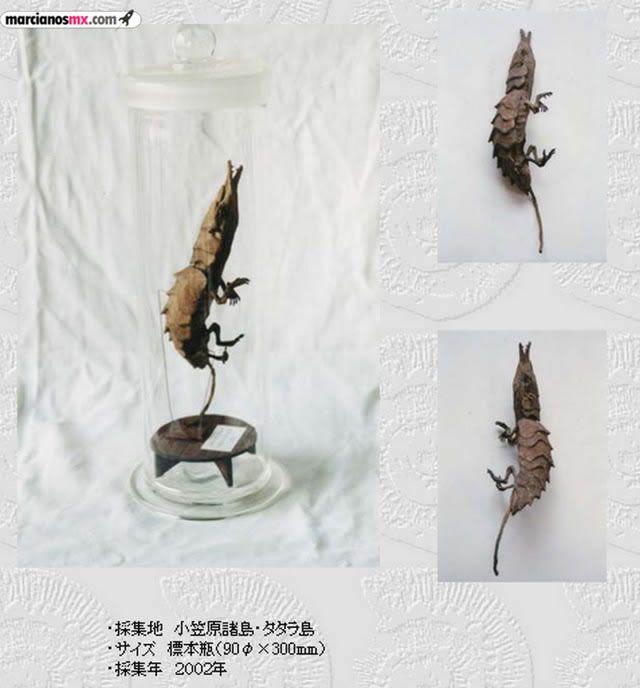 Criaturas Monstruosas Hajime Emoto (12)