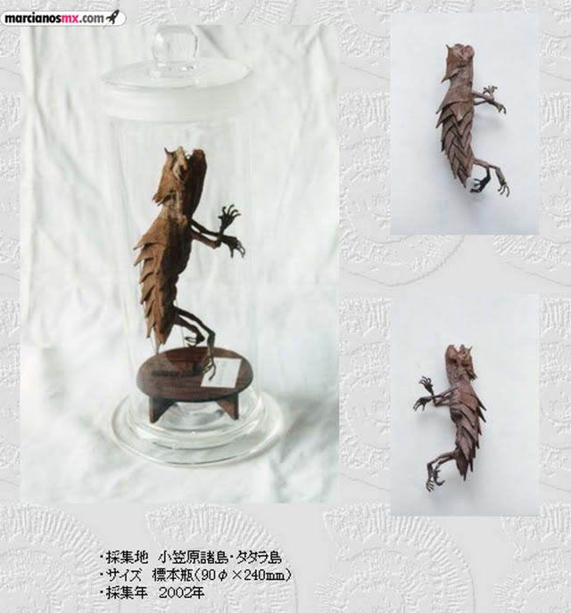 Criaturas Monstruosas Hajime Emoto (11)
