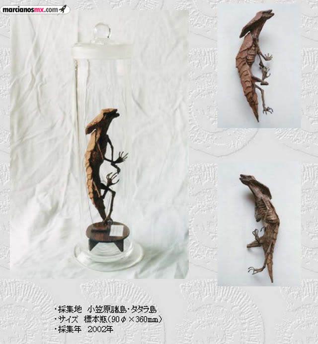 Criaturas Monstruosas Hajime Emoto (10)