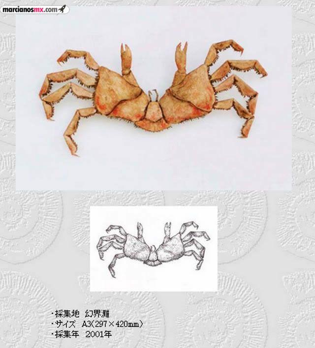 Criaturas Monstruosas Hajime Emoto (4)