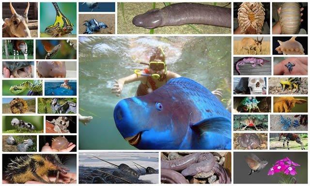 21 animales que probablemente desconocías