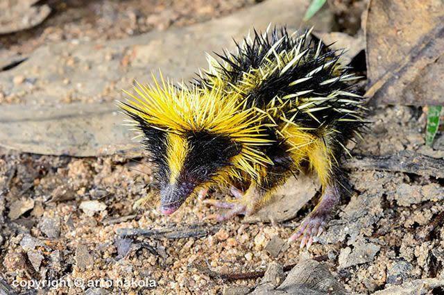 animales raros desconocidos (11)