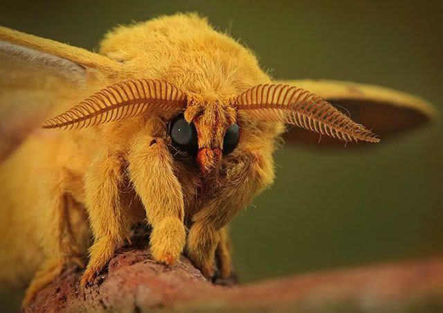 animales raros desconocidos (2)