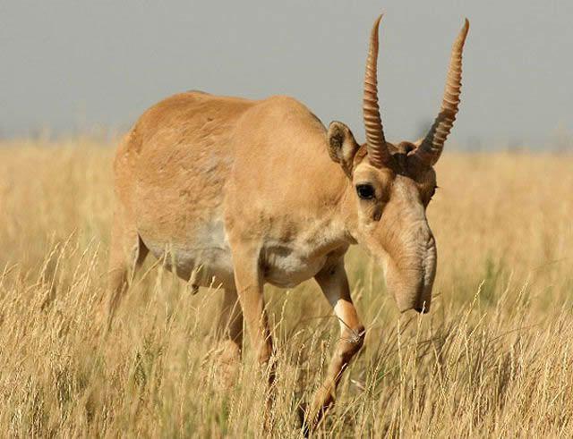 animales raros desconocidos (33)
