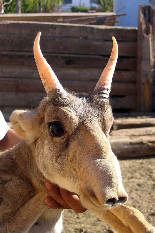 animales raros desconocidos (32)