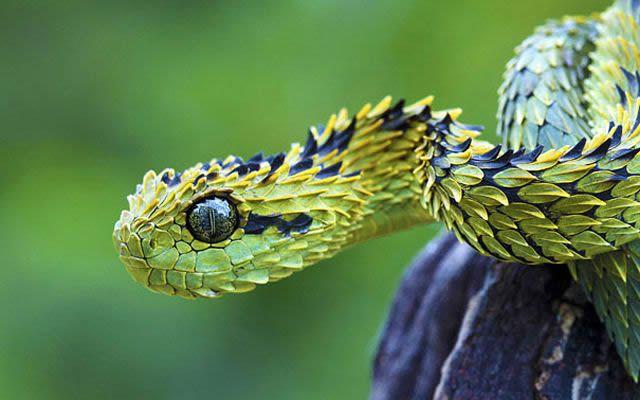 animales raros desconocidos (31)