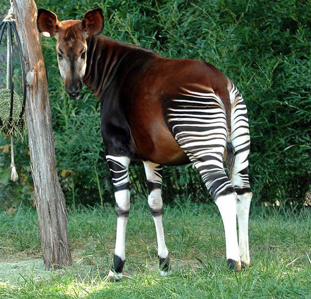 animales raros desconocidos (25)