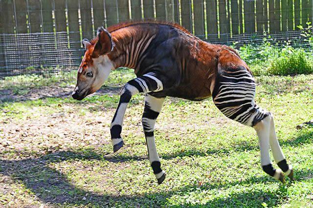 animales raros desconocidos (24)