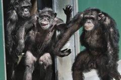 El momento inolvidable en que unos monos de laboratorio ven la luz por primera vez en décadas