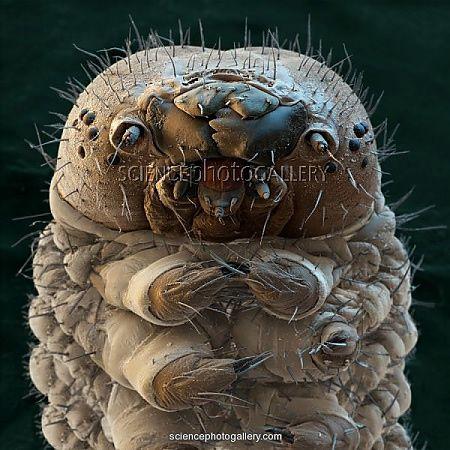 12 cosas comunes que dan miedo bajo el microscopio  Marcianos