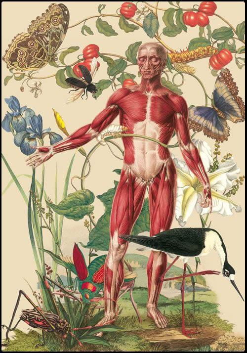 Juan Gatti ilustraciones anatomía (3)