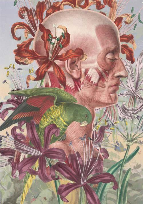Juan Gatti ilustraciones anatomía (7)