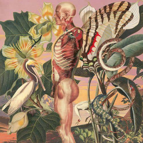 Juan Gatti ilustraciones anatomía (9)