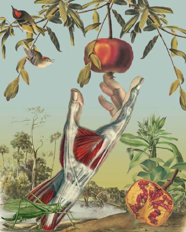 Juan Gatti ilustraciones anatomía (15)
