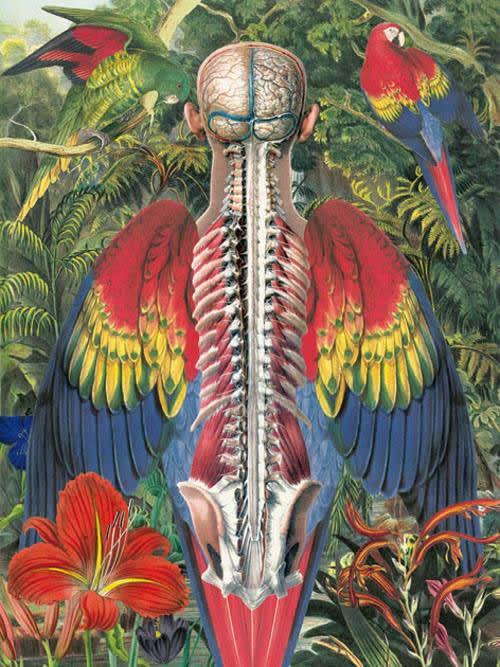 Juan Gatti ilustraciones anatomía (14)