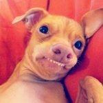 Tuna, el perro más agraciado de Internet