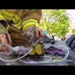 Salvando gatito de un incendio