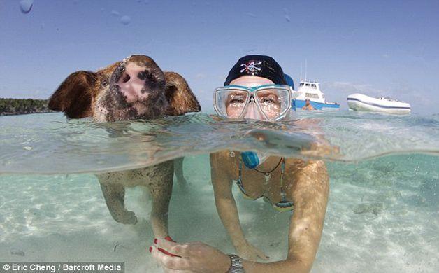 isla cerdos bahamas (7)