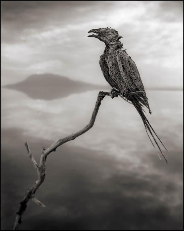 animales petrificados lago natron Nick Brandt (6)