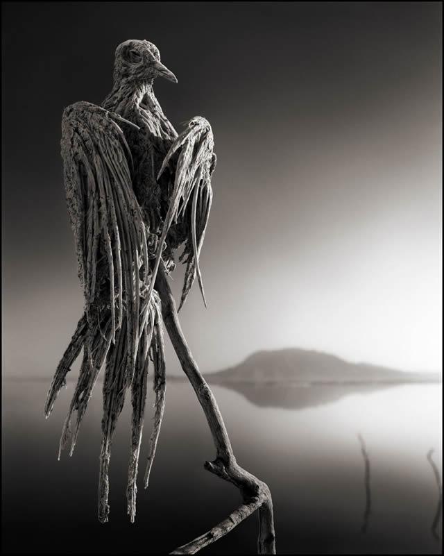 animales petrificados lago natron Nick Brandt (5)