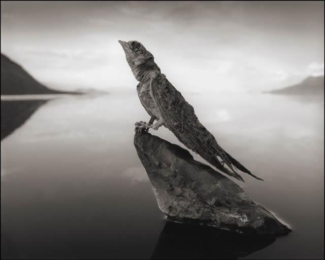 animales petrificados lago natron Nick Brandt (4)