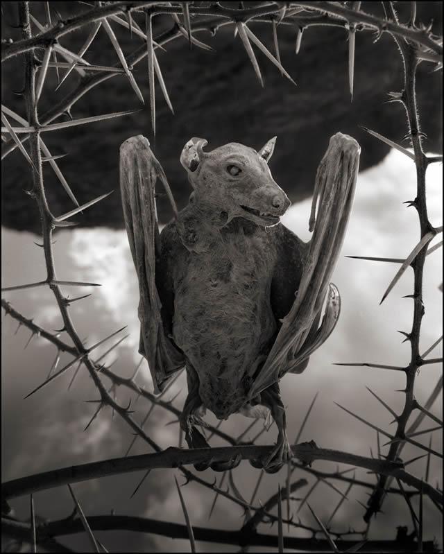 animales petrificados lago natron Nick Brandt (3)
