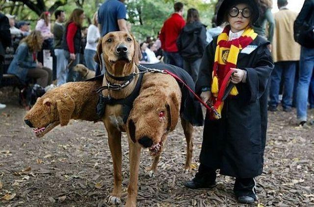 disfraces halloween para niños (2)