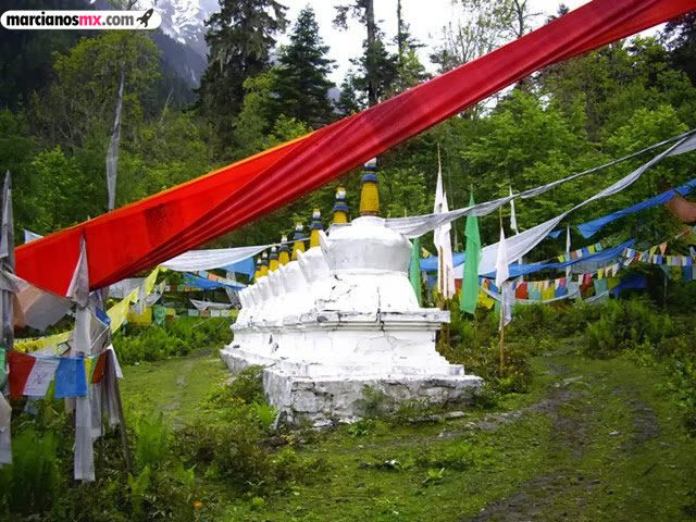 Funeral Bebés Arboles Tibet (2)