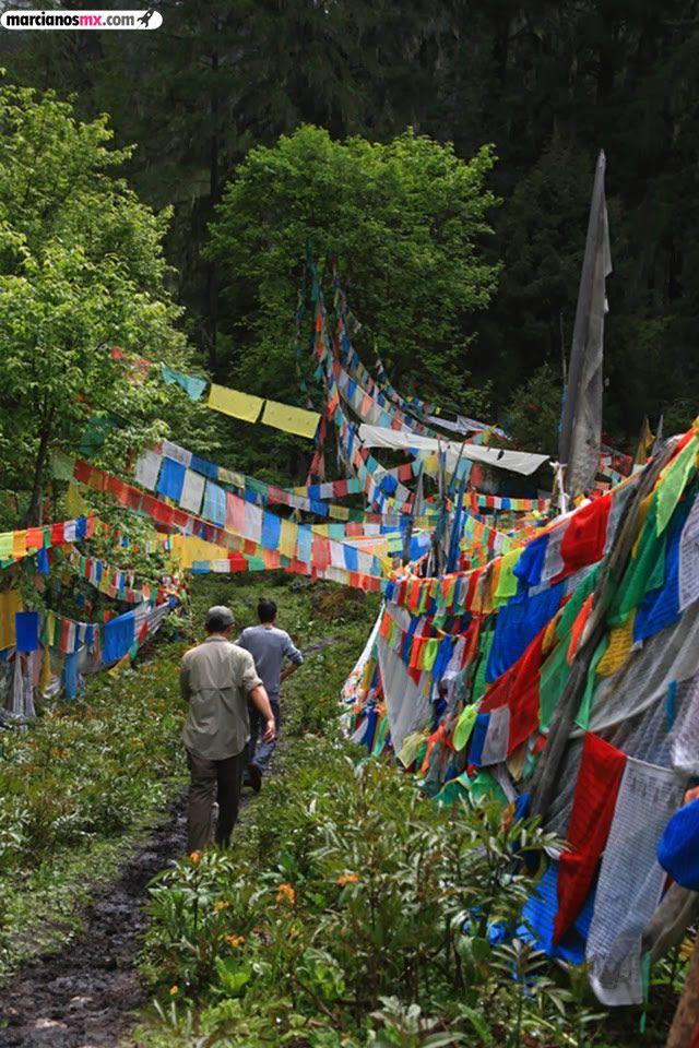Funeral Bebés Arboles Tibet (28)