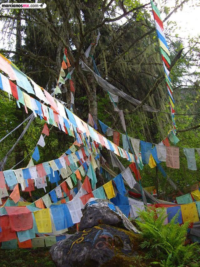 Funeral Bebés Arboles Tibet (17)