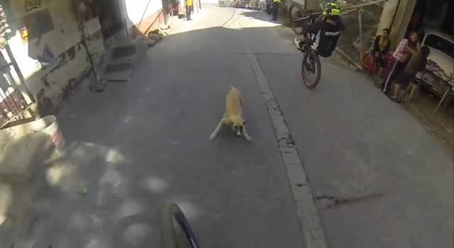 perro down hill taxco