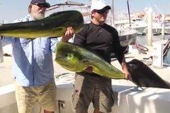 León marino roba 'trofeo' a pescador