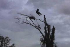 esqueleto volador, simplemente aterrador